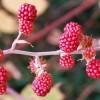 Armazene Frutos Silvestres