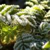 Dezembro na Horta e no Jardim
