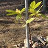 Ação de limpeza de terreno e plantação de espécies autóctones na Serra de Stª Justa