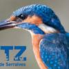 O Parque de Serralves organiza a 2ª edição do Bioblitz, inventariação relâmpago de plantas e animais