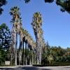 Jardim Botânico Tropical sem Jardineiros