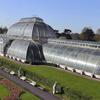 Bromélias nos Kew Gardens – Londres