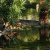 Um lago no jardim