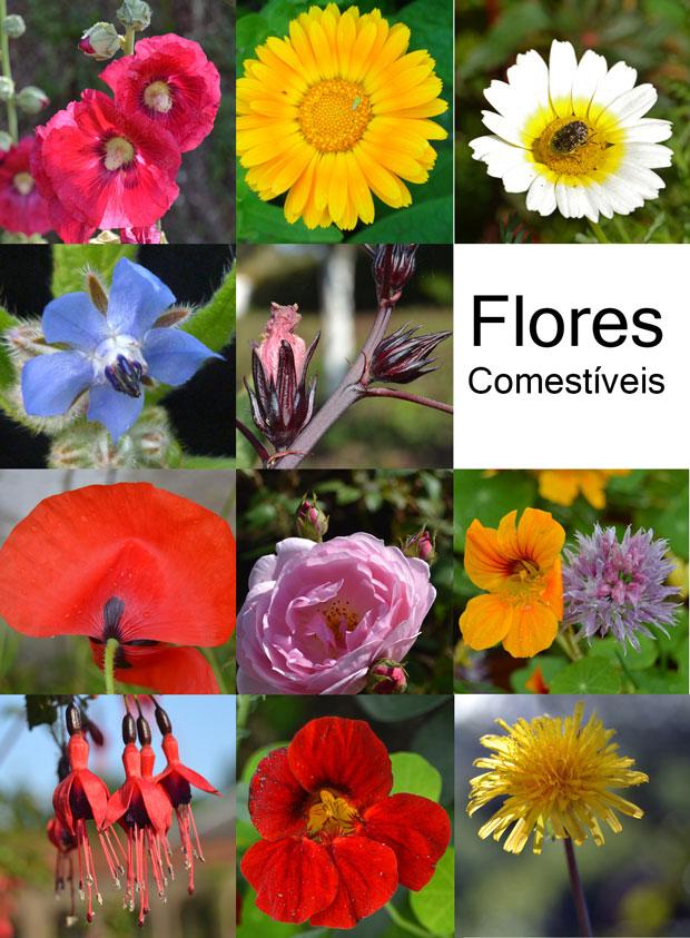 mosaico_flores-comestiveis_1