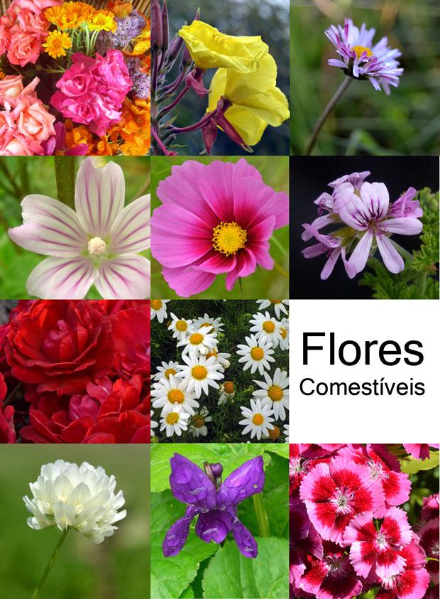 mosaico_flores_comestiveis_2