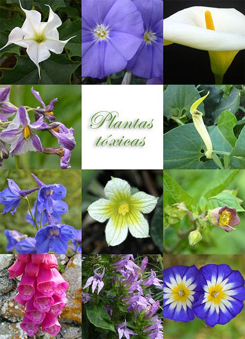 plantas t xicas portal do