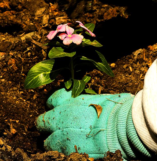 planting-109014_1920