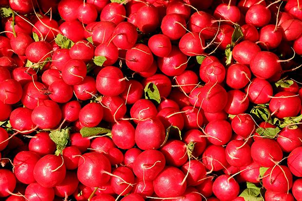 radishes-1623915_1920