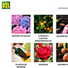 KB  tem novo website