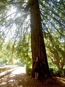 sequoia-(12)