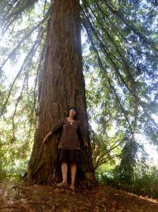 sequoia-(7)