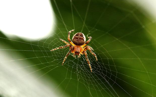 spider-918485_1920