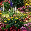 Um jardim de borboletas, mil cores e perfumes são irresistíveis para estes insetos